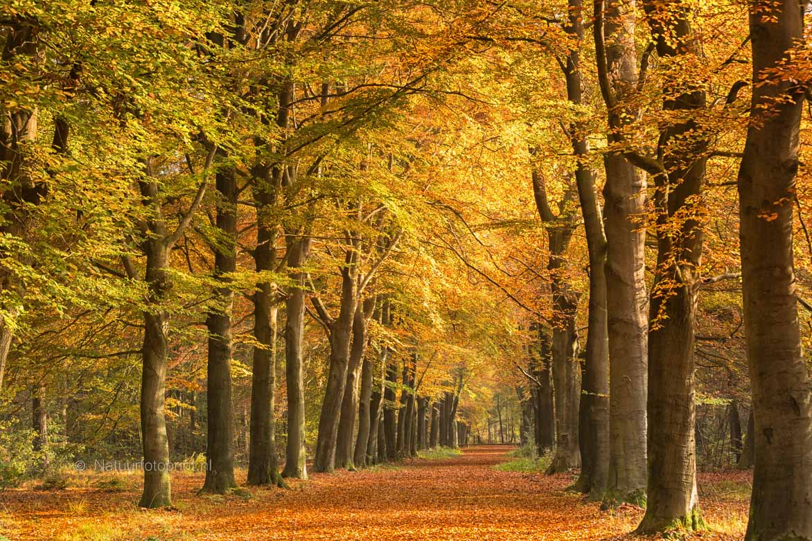Herfstlicht – Autumn light