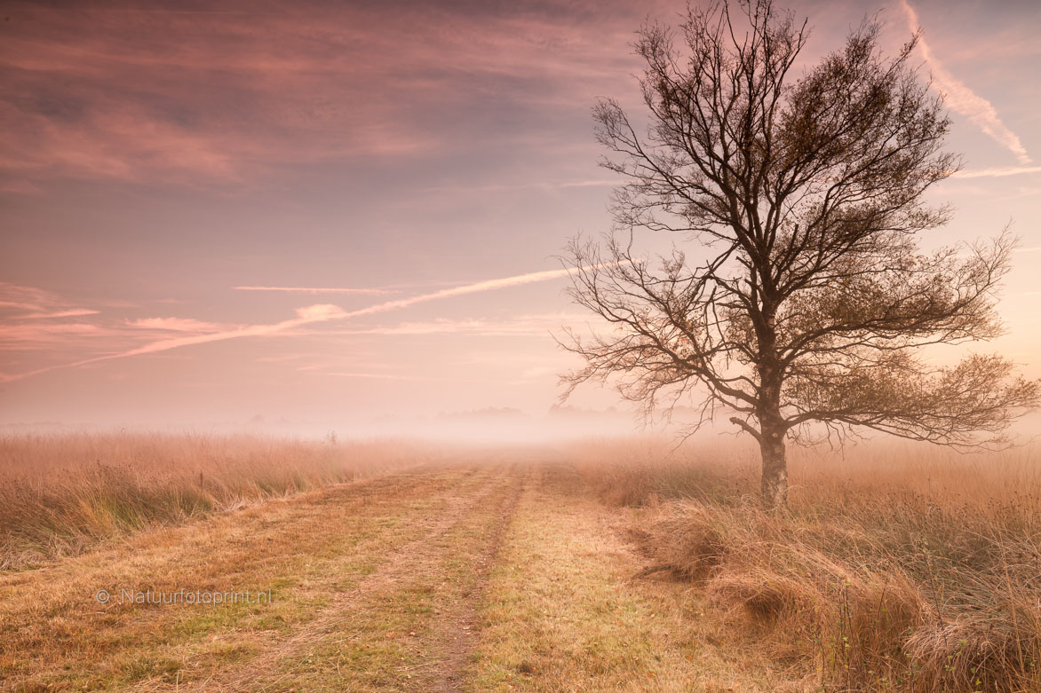 Wierdense Veld in de mist