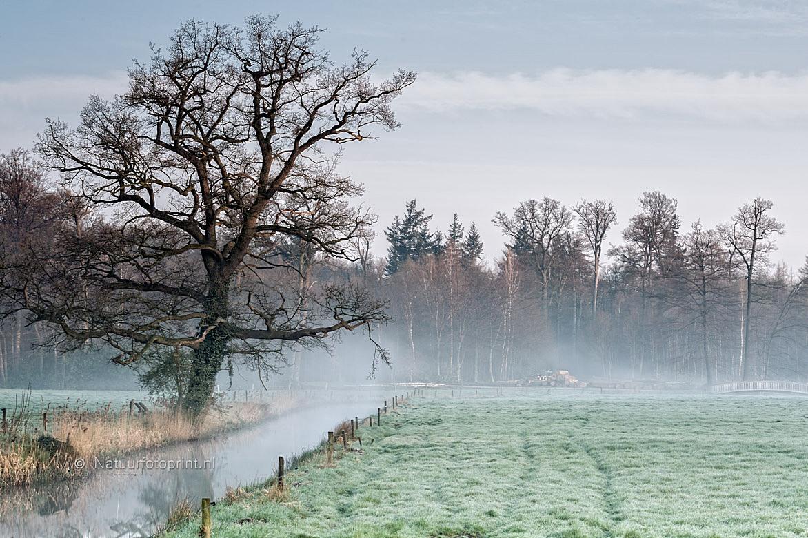 Landschap Twickel op een mistige ochtend – Misty morning at Estate Twickel