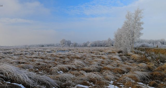 Frozen moor – Veen met vorst